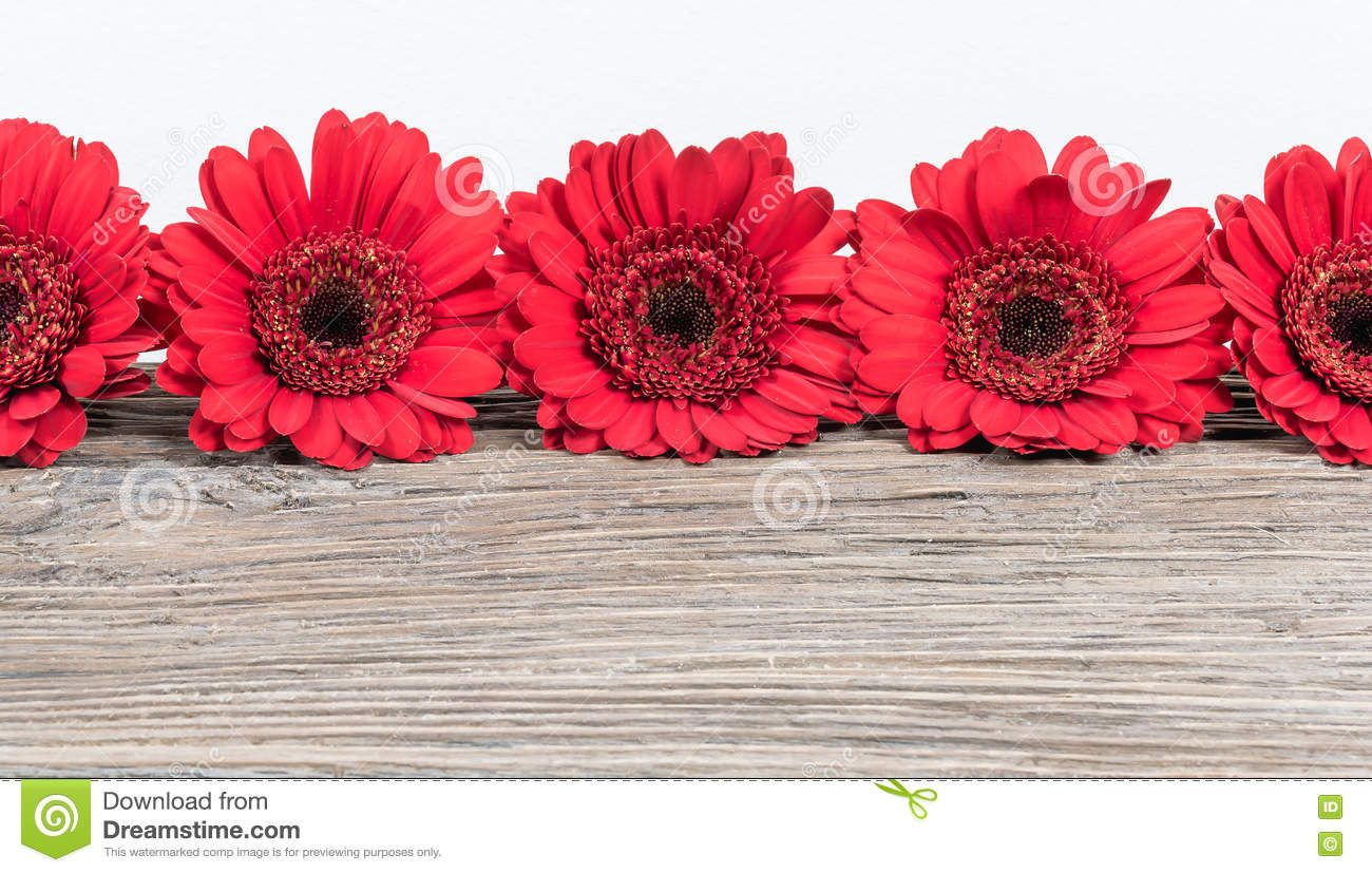 Red Gerbera Daisy Flowers Border. Stock Image - Image of frame ...