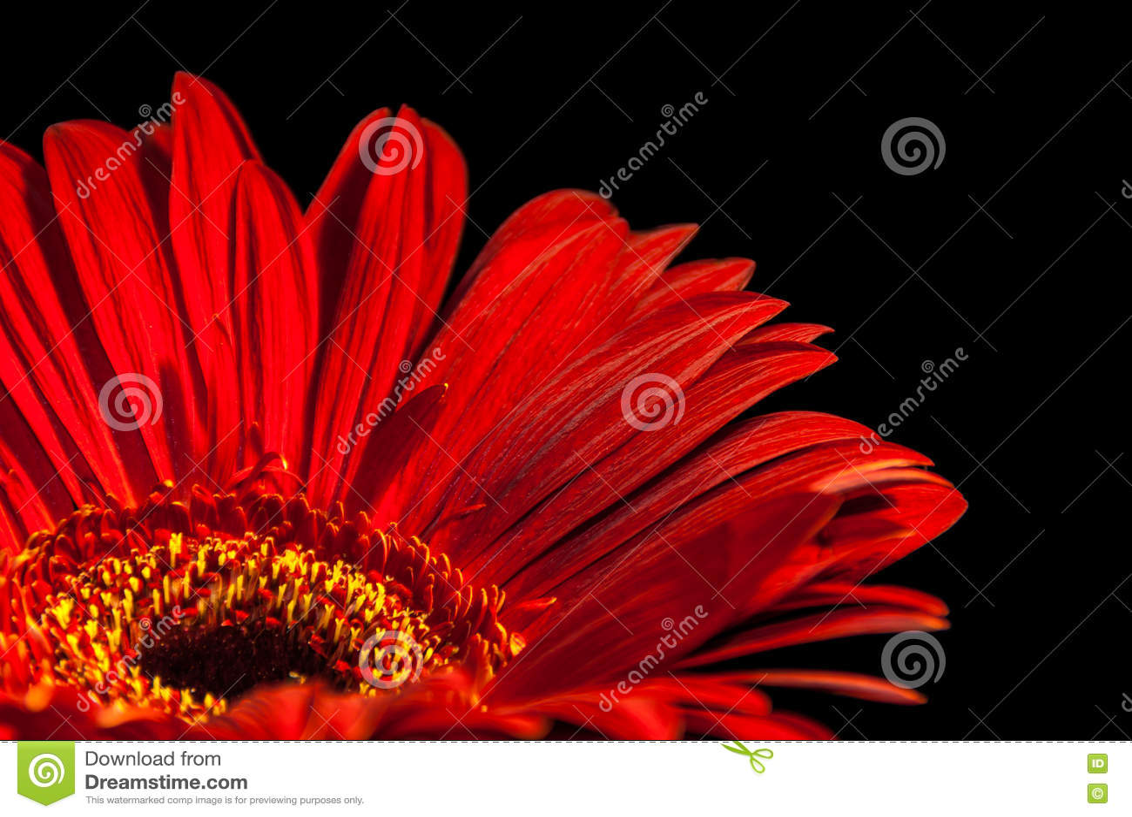 daisy black single women 25 gratifying daisy tattoos by nisha patel  women can wear a daisy piece on their leg,  black daisy on ribs.