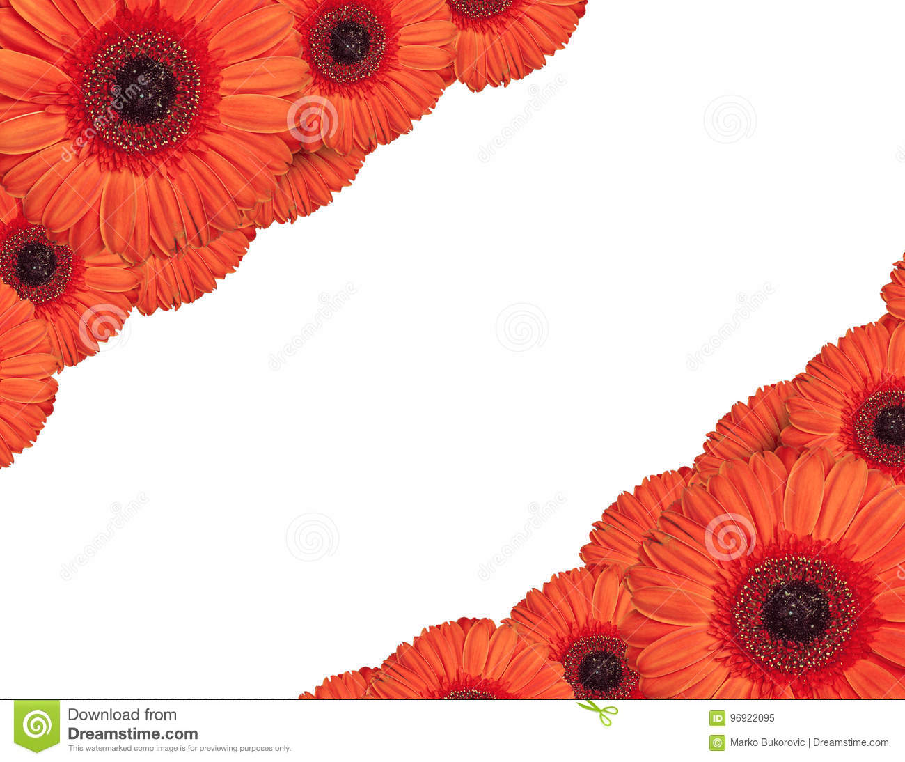 Red Gerbera Flowers Create A Frame On White Background Stock Image ...