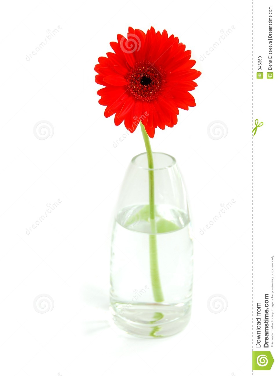 Red gerbera in a vase stock photo. Image of flower, round ...