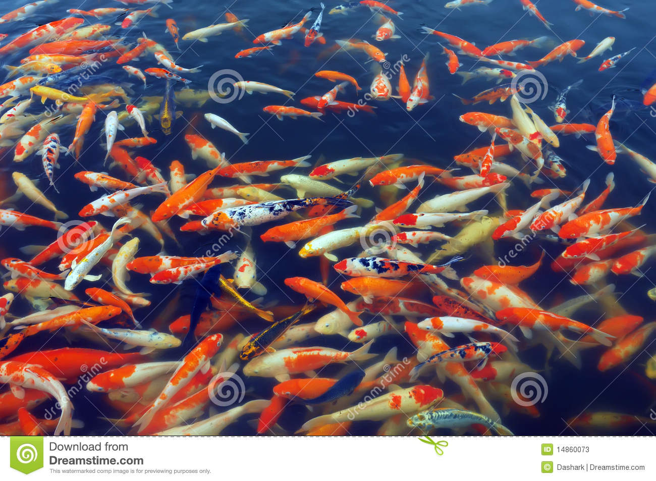 Red and gold fishes