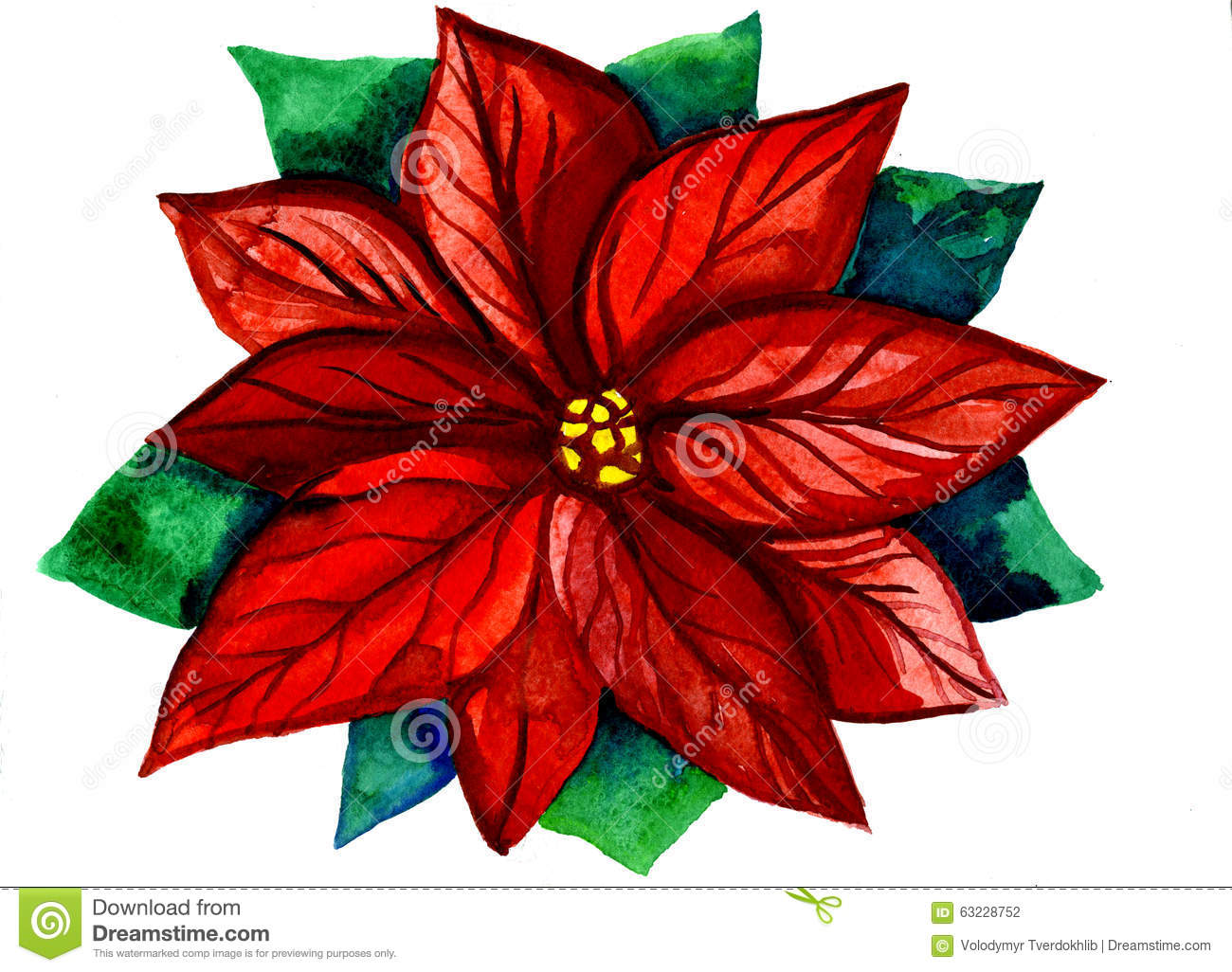 red and green christmas flower stock illustration  image, Natural flower