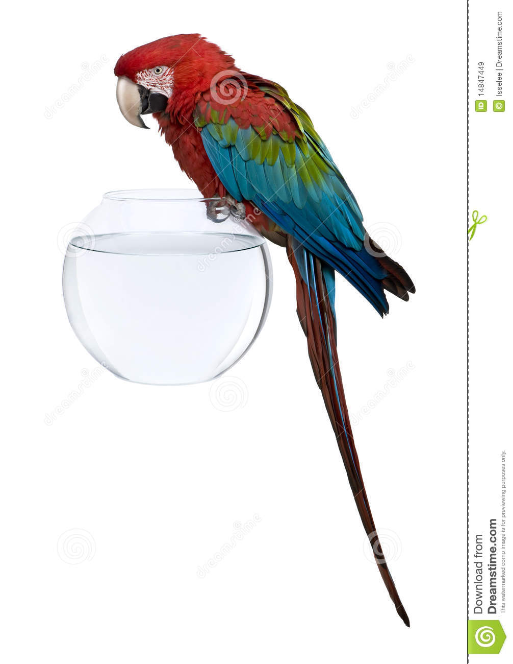 Download Red-and-green Macaw Perching On Empty Fish Bowl Stock Image - Image of parrot, bowl: 14847449