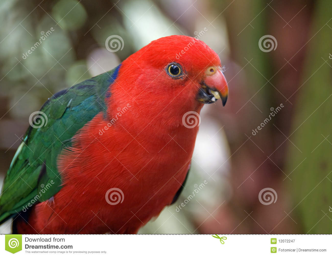 Red And Green Parrot Royalty Free Stock Photography - Image: 12072247