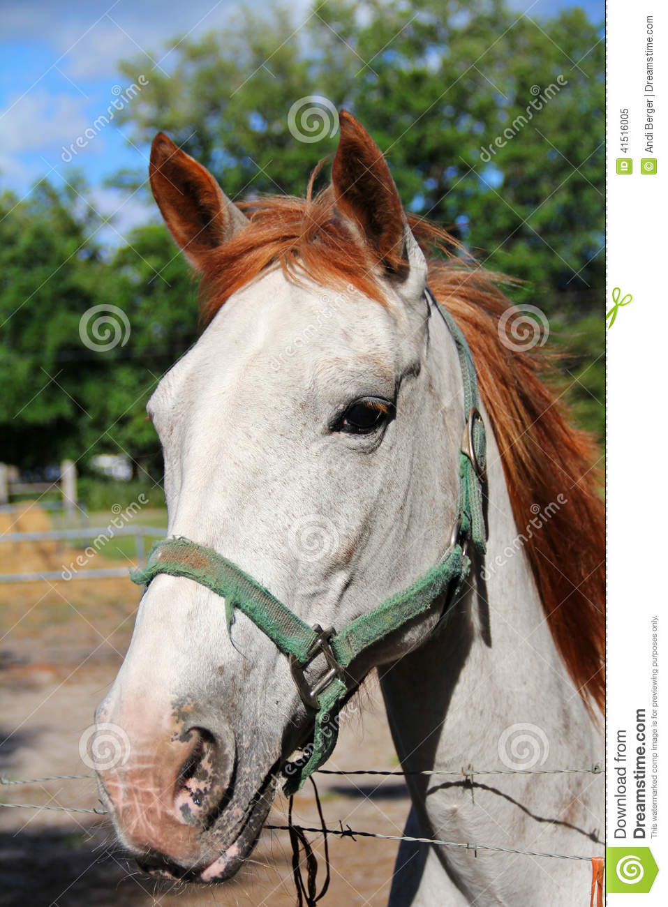 red hair horse vertical stock image  image of equine