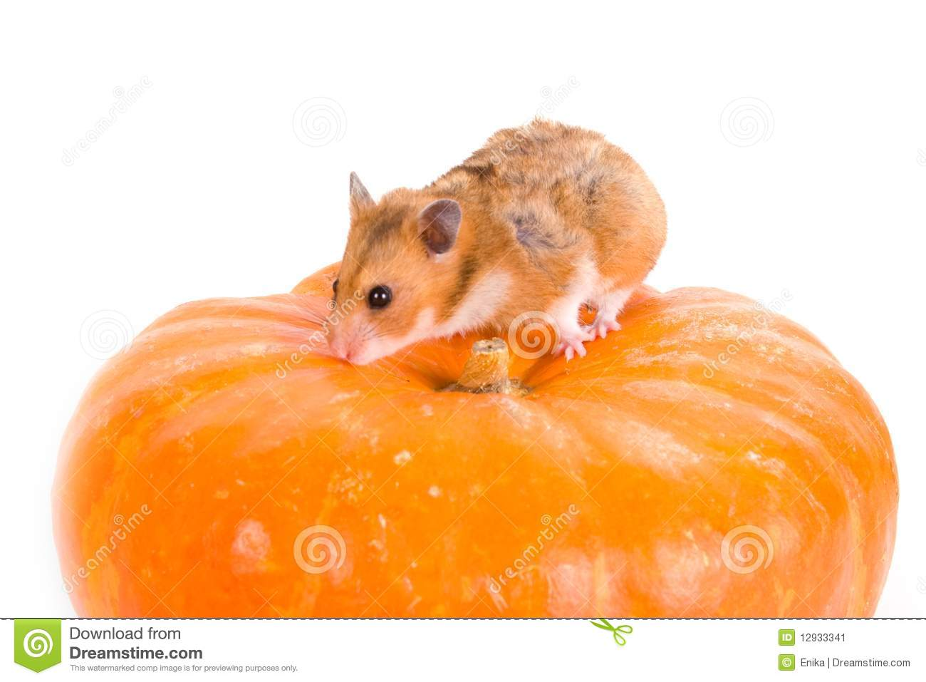 Redhamster