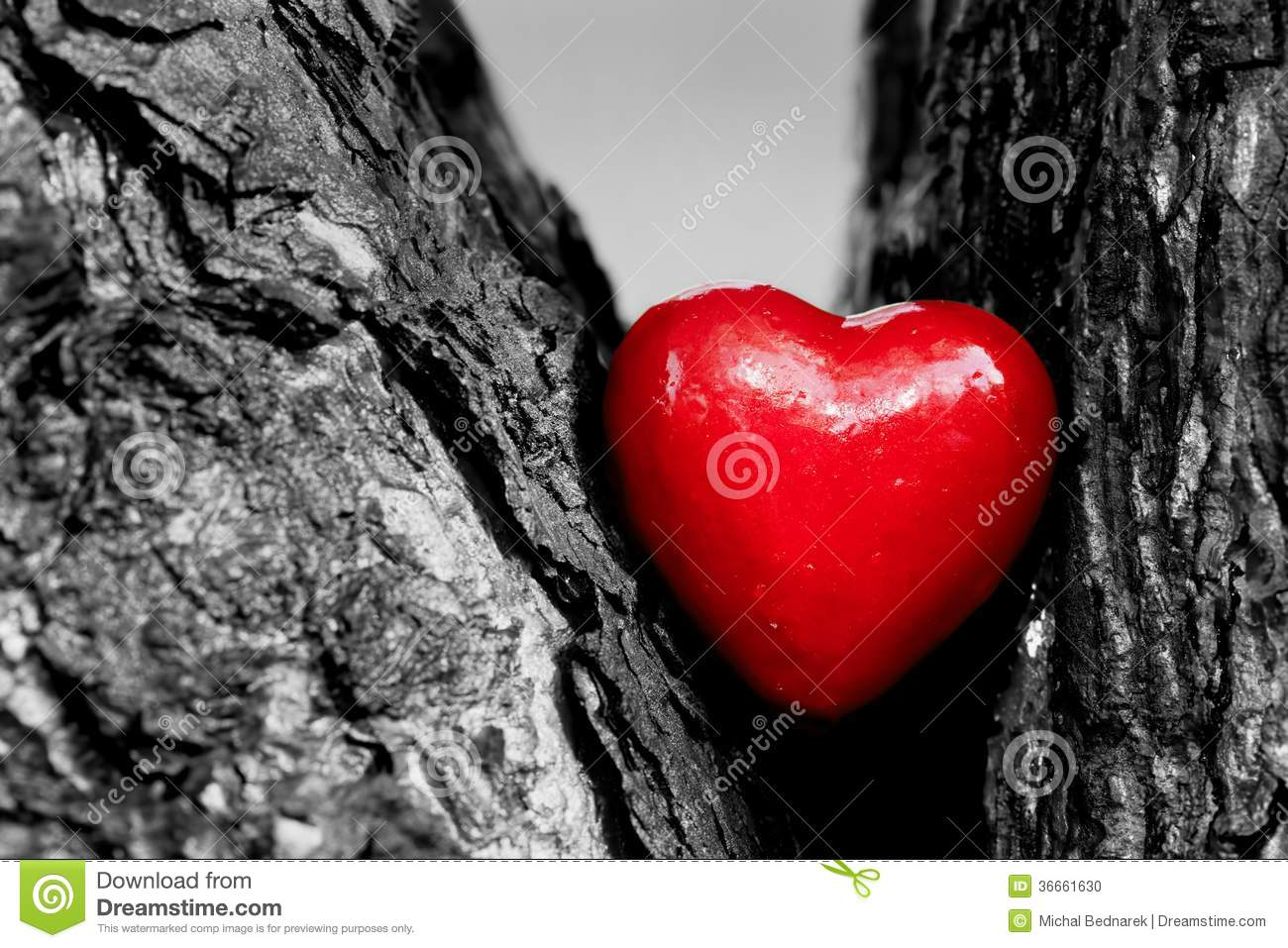 Red heart in a tree trunk romantic love stock photo for Pictures of black lovers