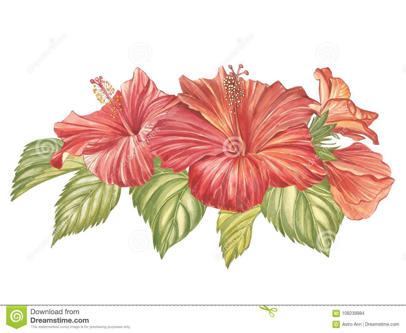 Red Hibiscus Flower Isolated On White Background. Watercolor ...