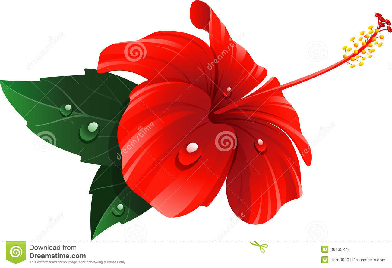 Red Hibiscus Flower Stock Vector Illustration Of Element 30135278