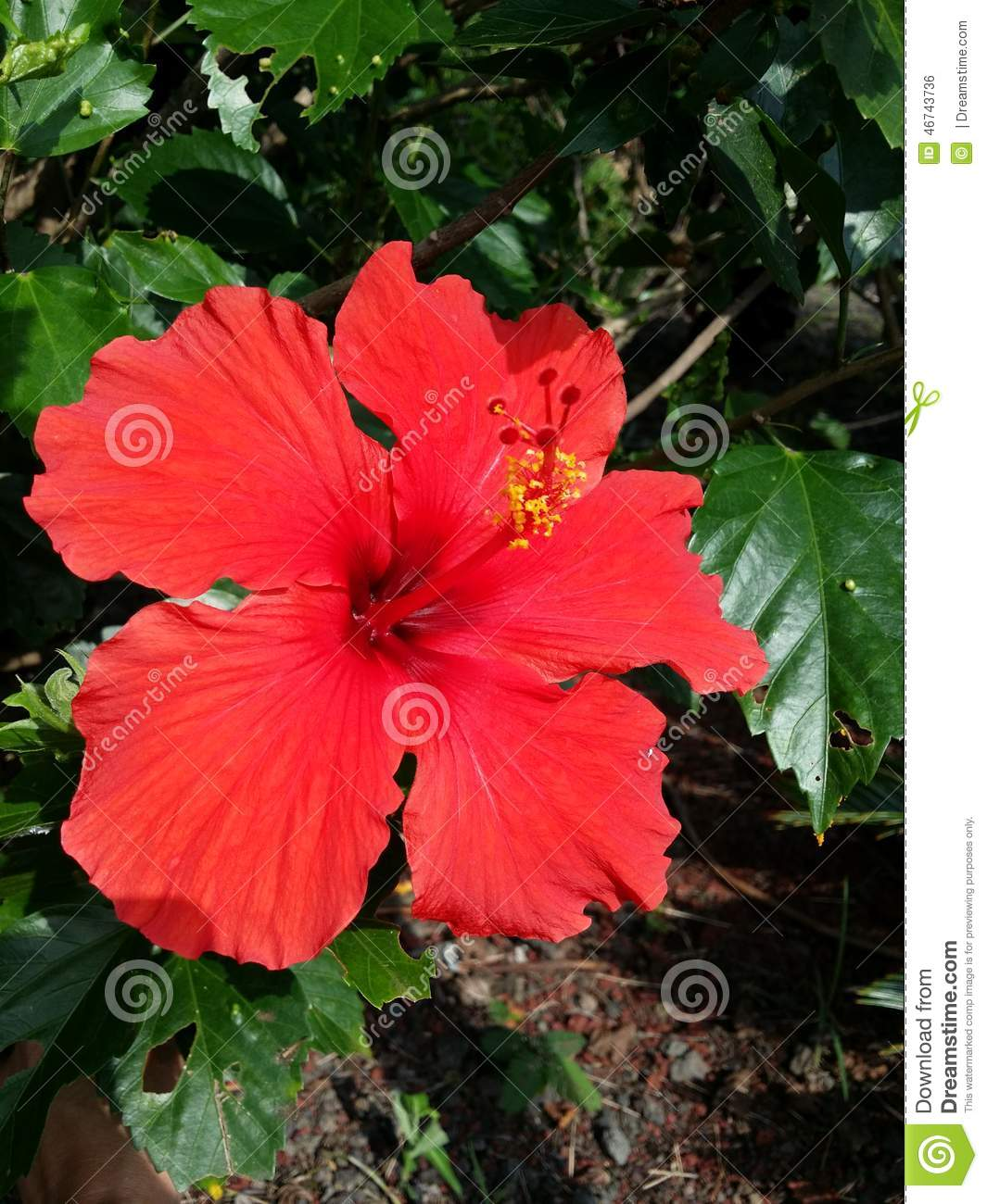 description tahiti tropical flower - photo #48