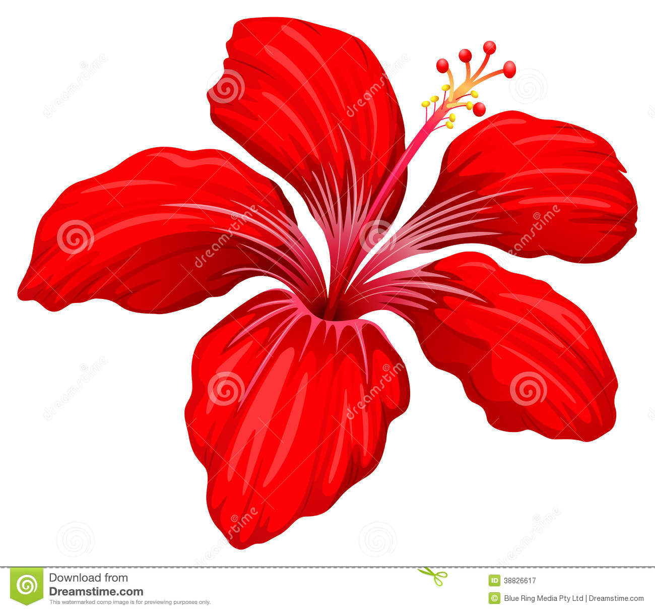 A red hibiscus plant stock vector illustration of flower 38826617 a red hibiscus plant pooptronica Image collections
