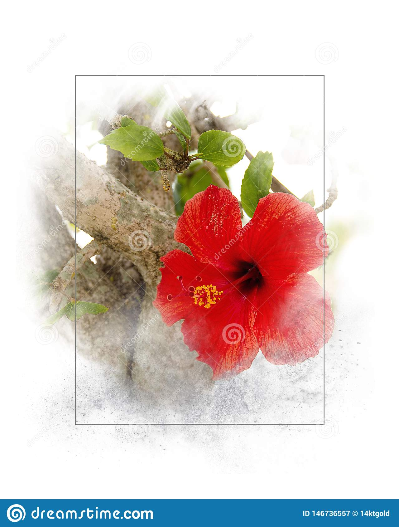 Red hibiscus in thin frame