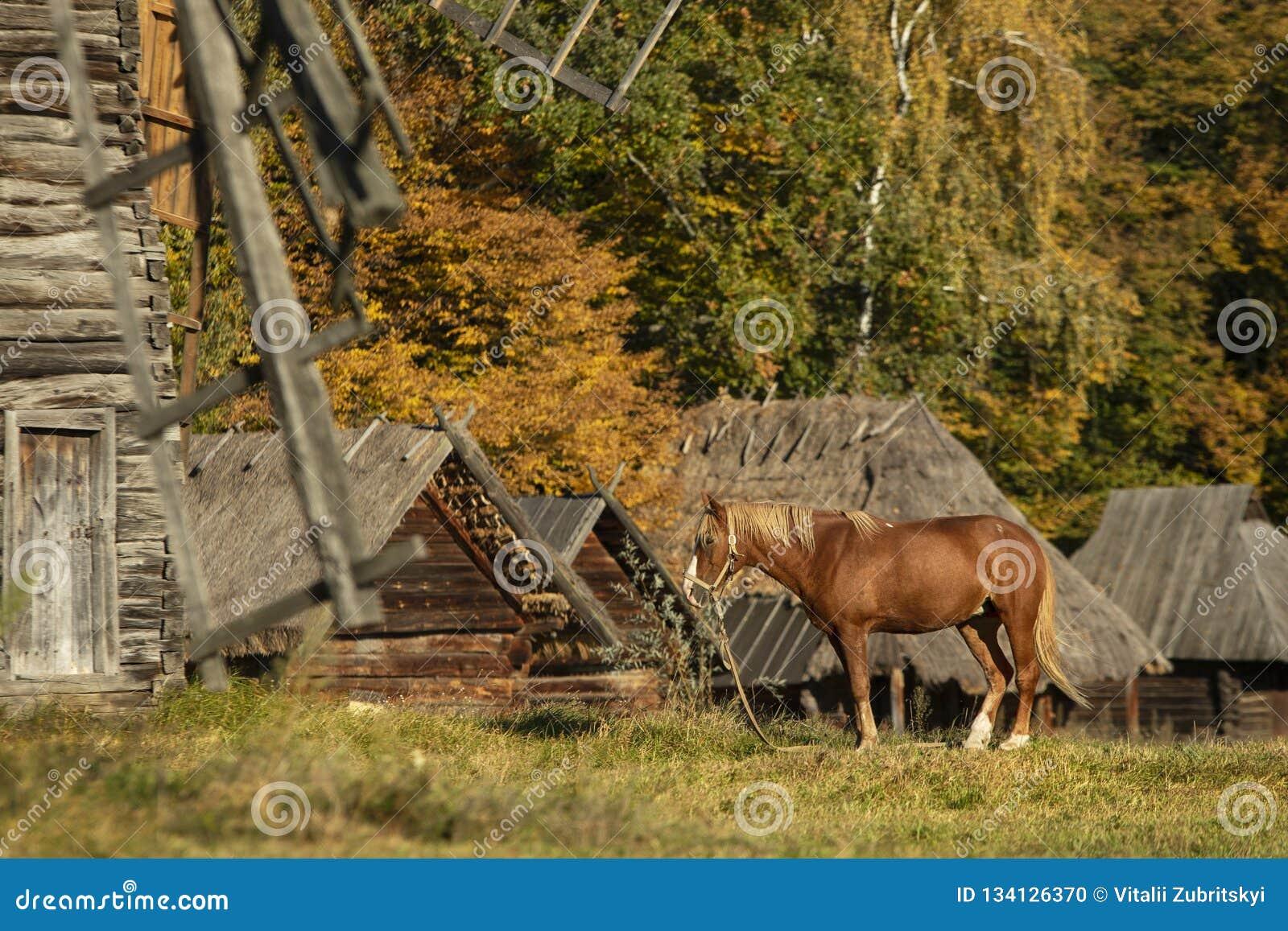 Red Horse in Autumn Village