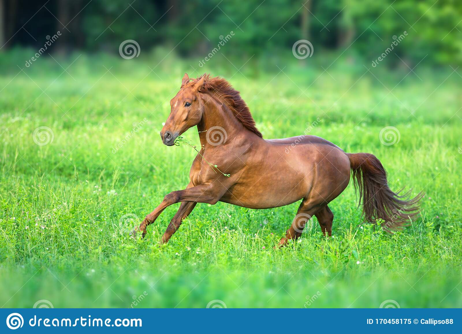 3 158 Red Horse Run Photos Free Royalty Free Stock Photos From Dreamstime