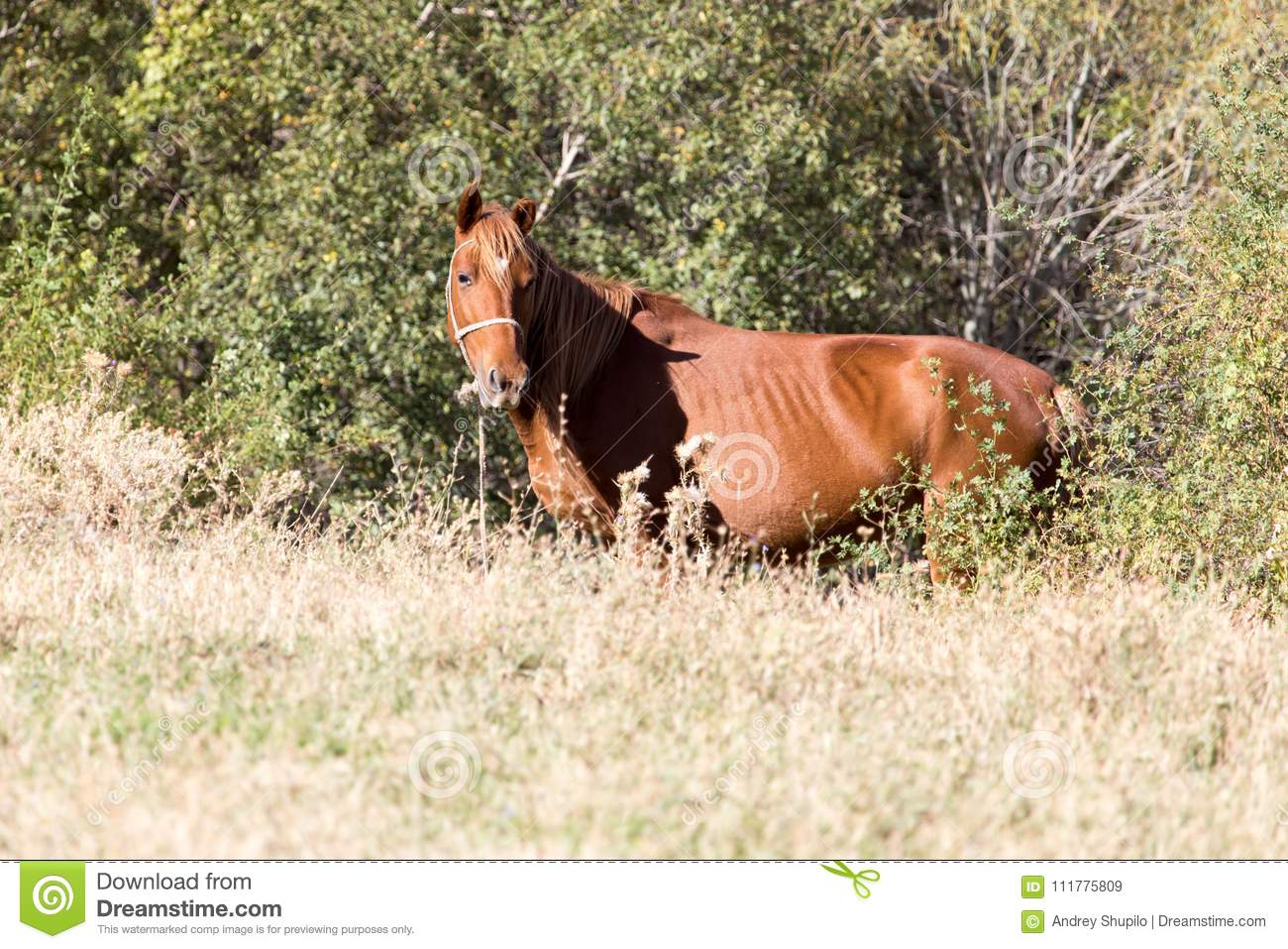 Red horse on nature in autumn