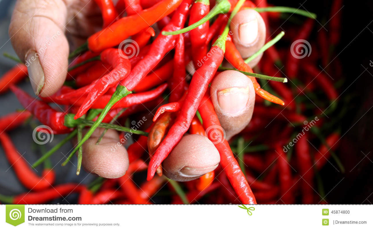 red hot chili in old lady hand stock photo - image of hand, fresh