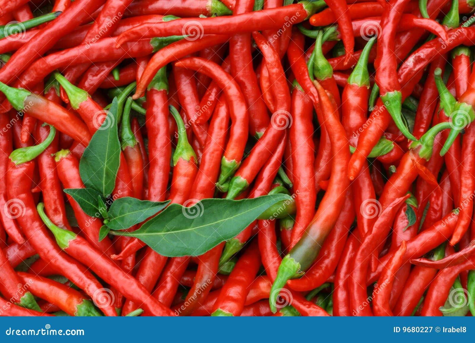 red chili peppers thailand stock photo cartoondealer. Black Bedroom Furniture Sets. Home Design Ideas