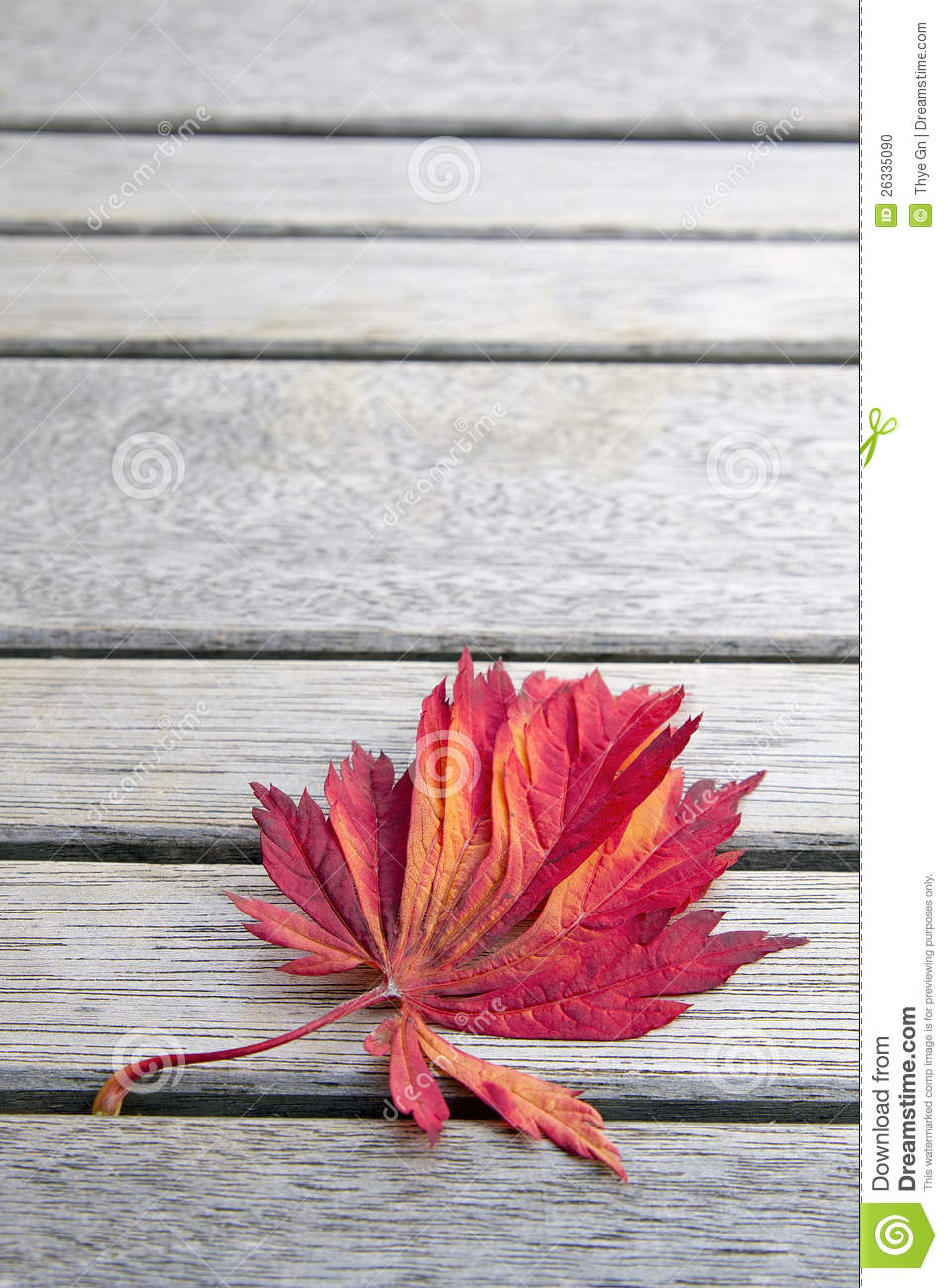 Red Japanese Maple Leaf On Wood Bench Background Stock
