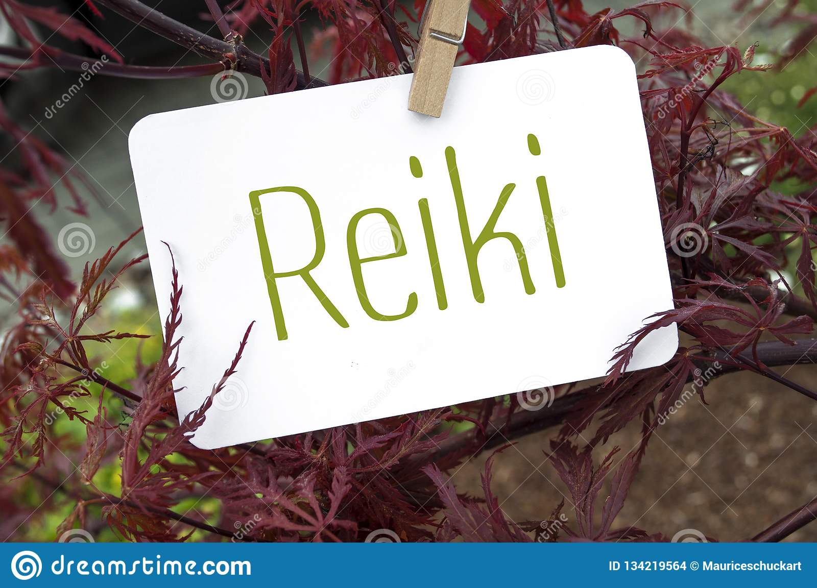 Maple with Reiki