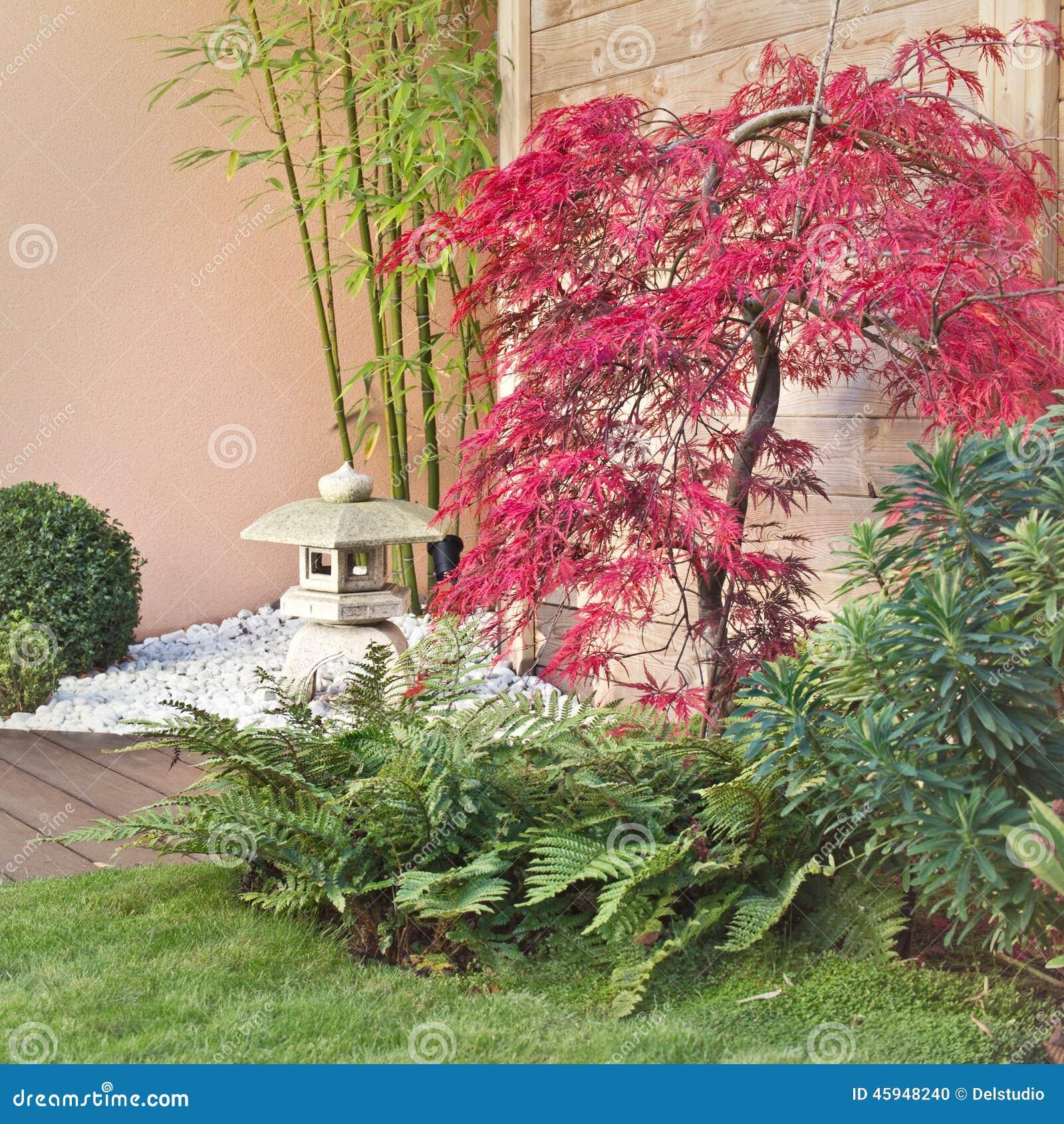Red japanese maple tree stock photo image of lantern for Zen garden trees