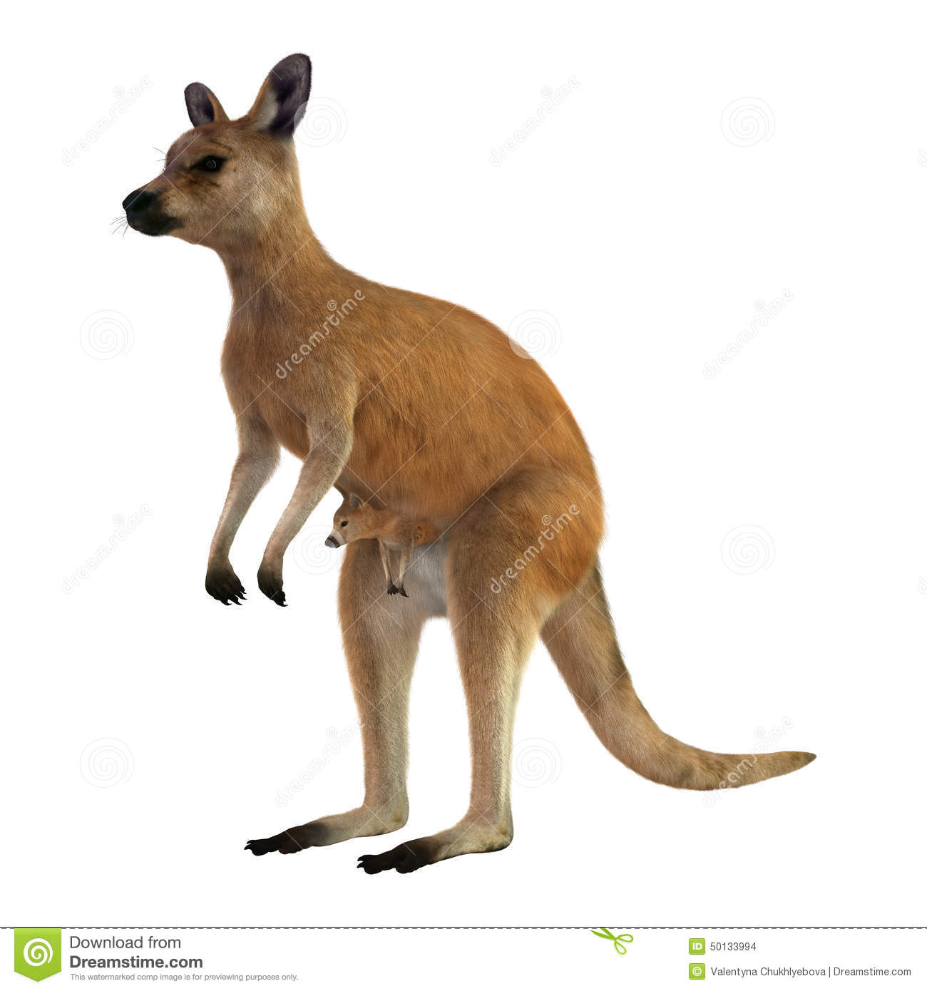 red kangaroo with baby stock photo image 50133994 kangaroo clipart gif kangaroo clip art free download