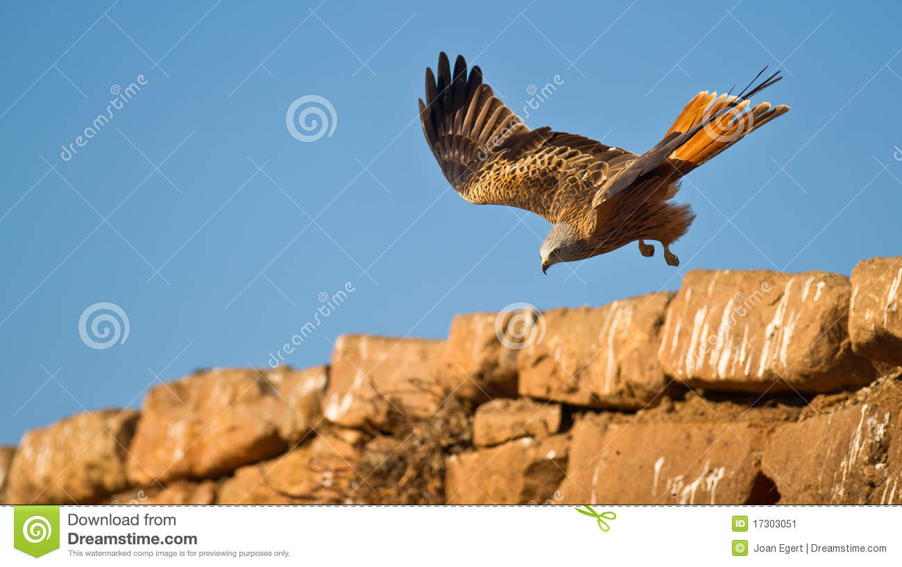 A Red Kite overpassing a wall