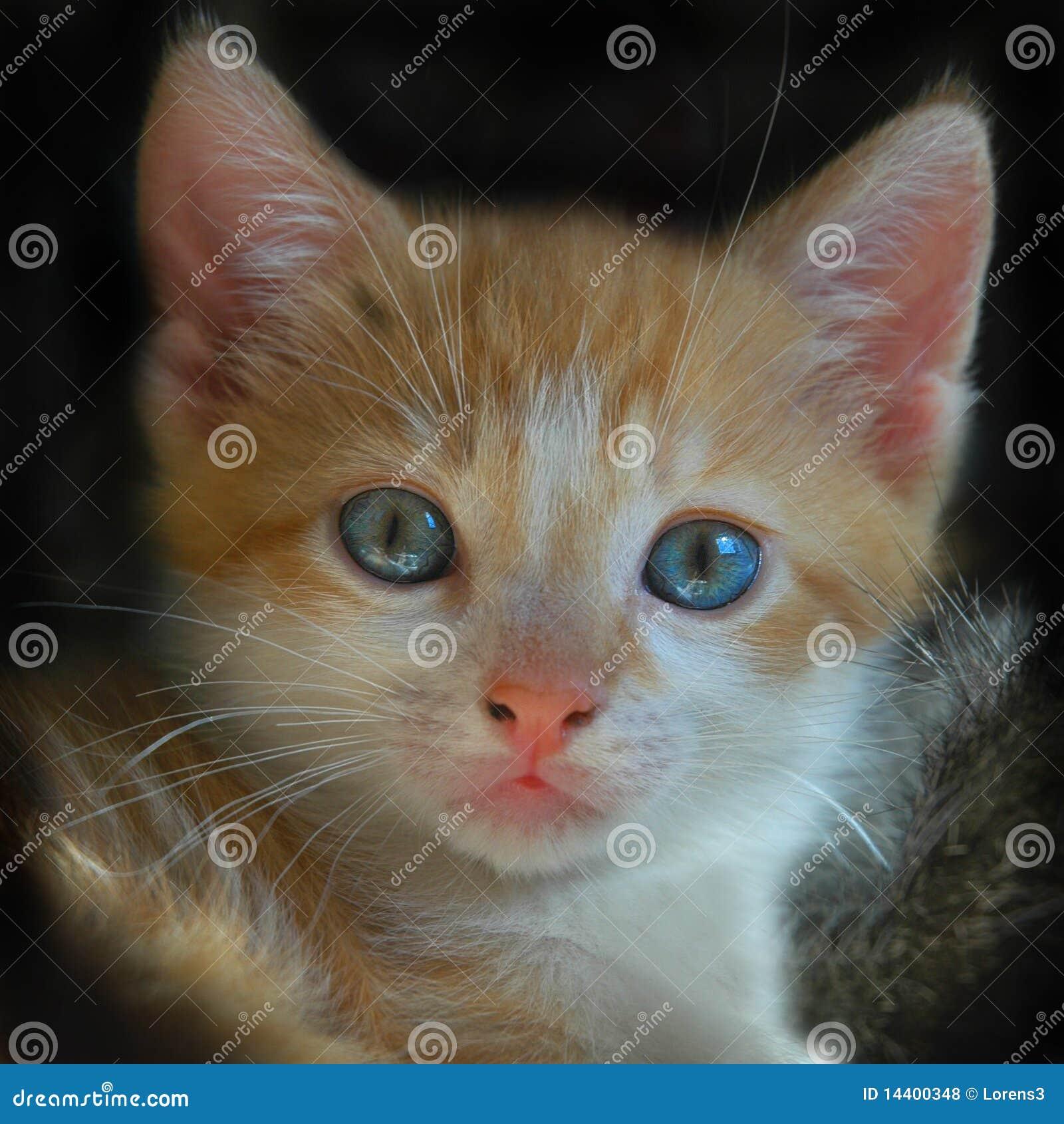 probiotics for kittens