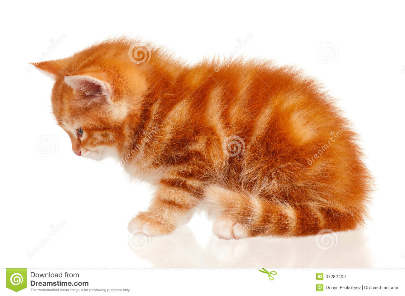 Red Kitten Royalty Free Stock Images - Image: 37282409
