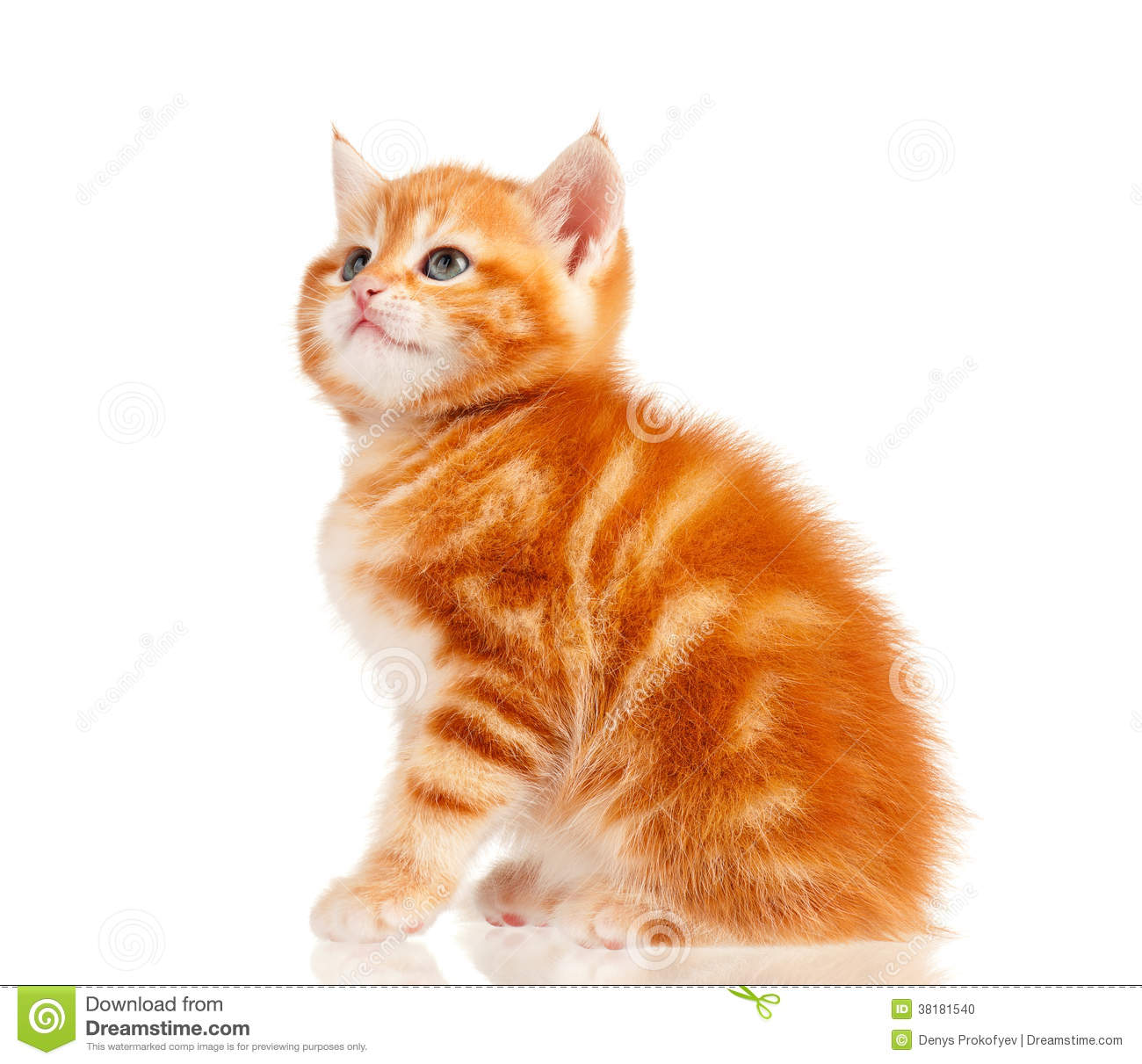 image A red kitten with a sweet cougar ar amp ki
