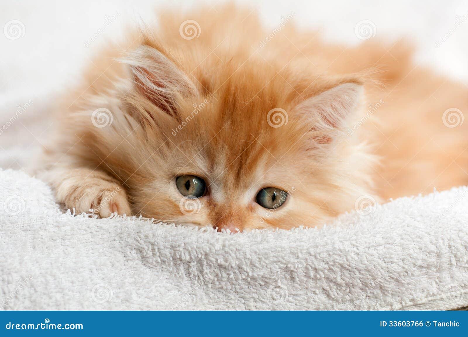 Red kitten nestled against a white towel
