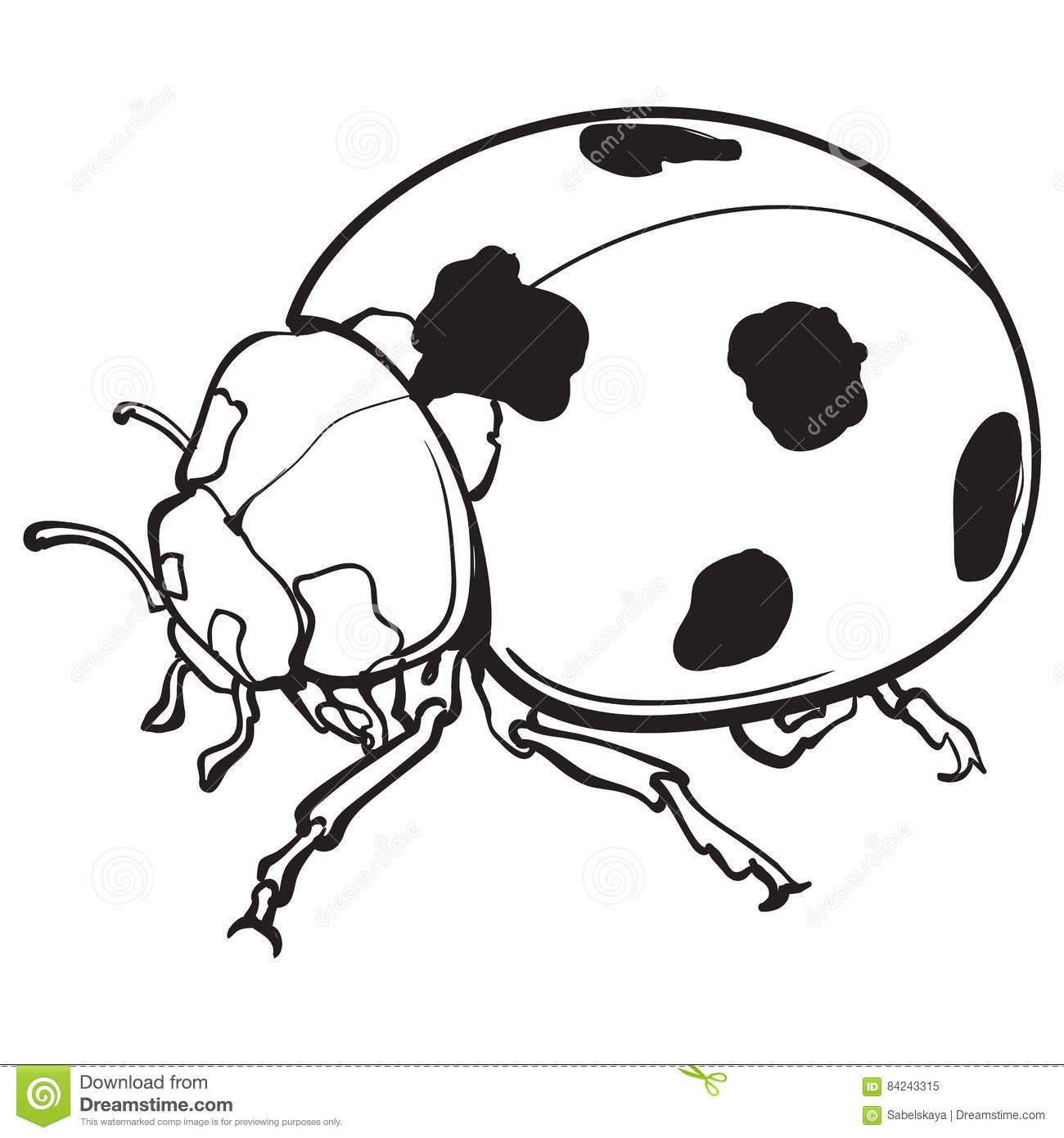Line Drawing Lady : Red ladybug ladybird with black spots isolated sketch