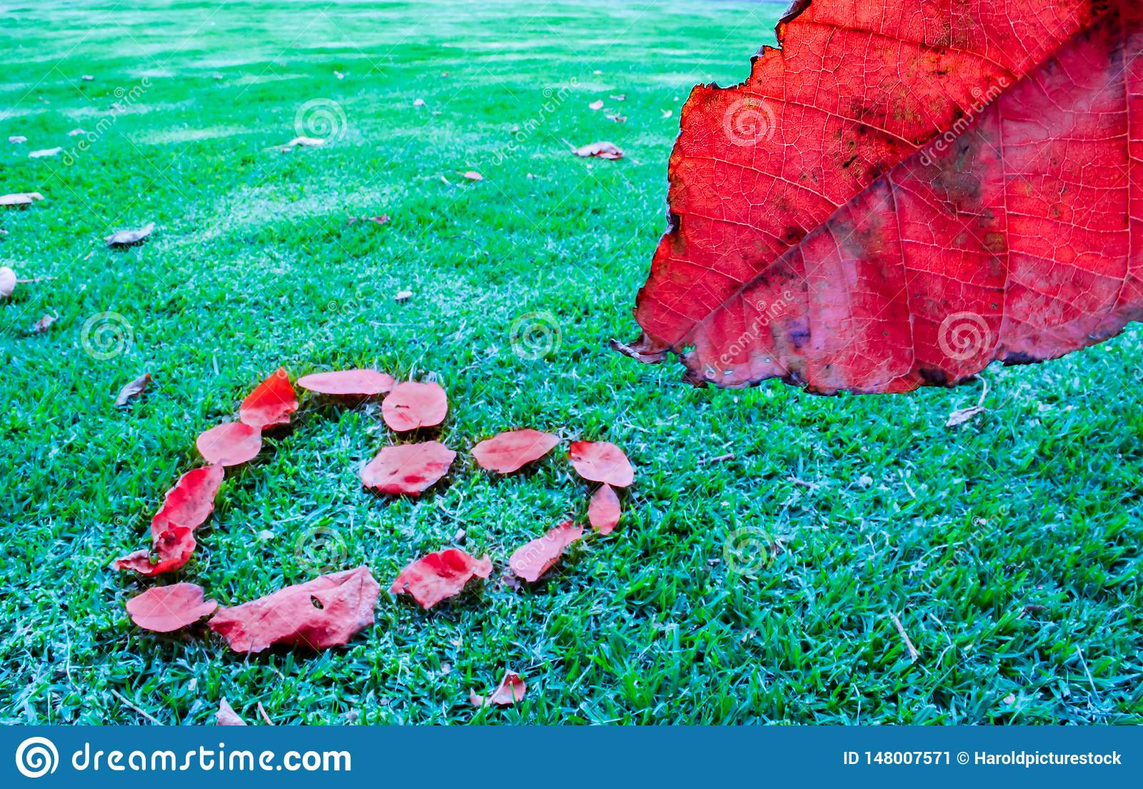 Red Leaf and Heart
