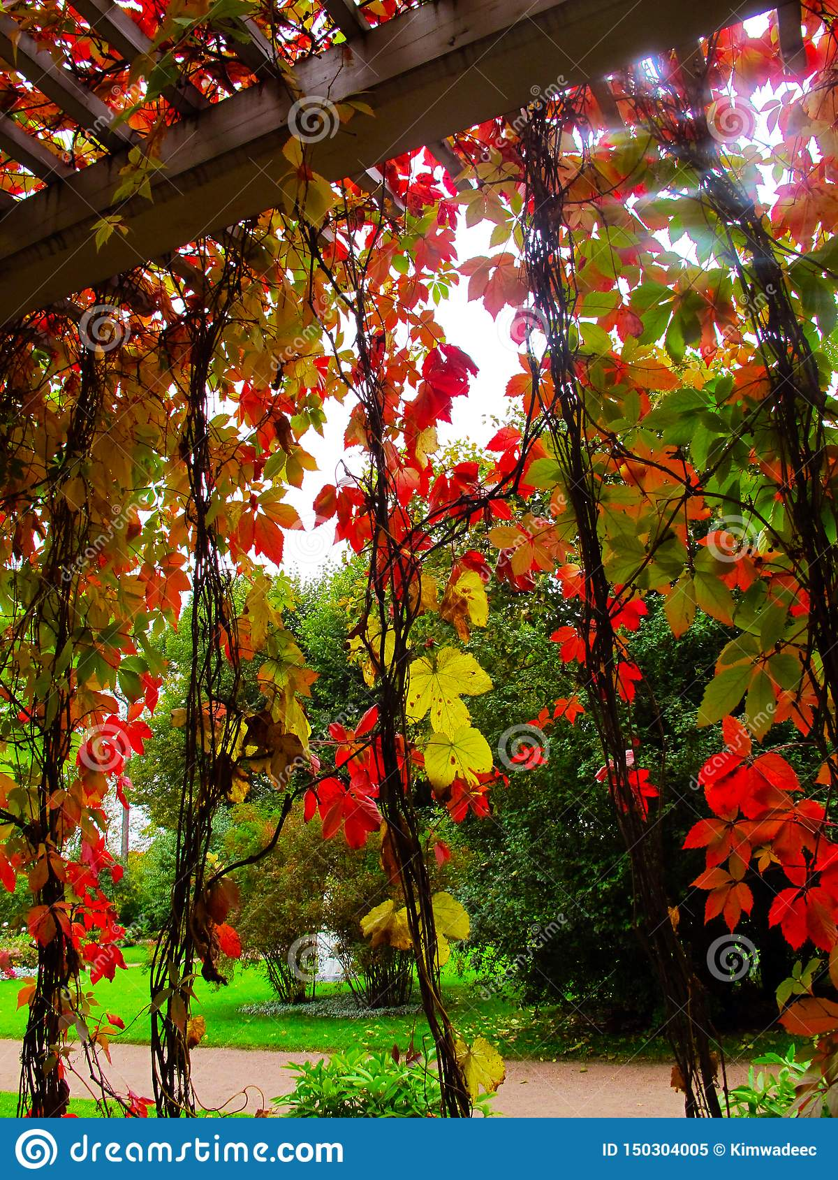 Red autumn leaves curtain, wood battens