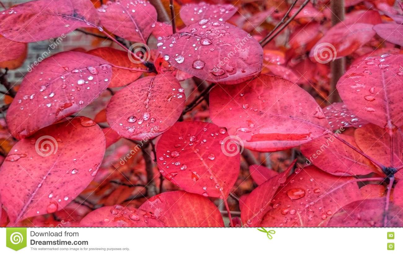 Oregon City (OR) United States  city photos gallery : Autum background. Red, wet leaves. Fragility and freshness.