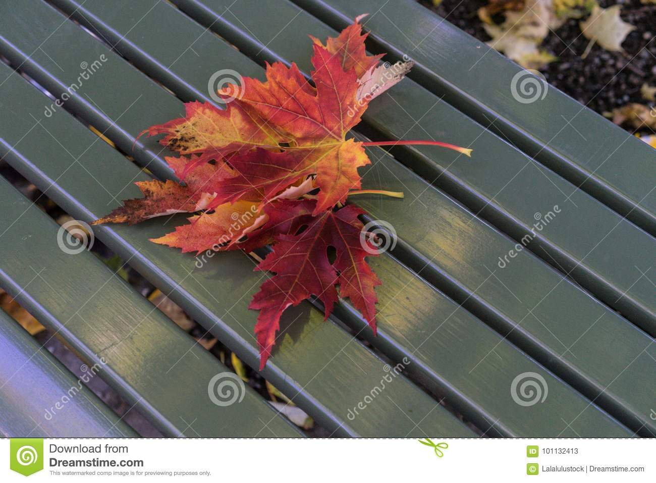 Tremendous Red Leaves In Autumn On Green Wooden Park Bench Stock Image Ibusinesslaw Wood Chair Design Ideas Ibusinesslaworg