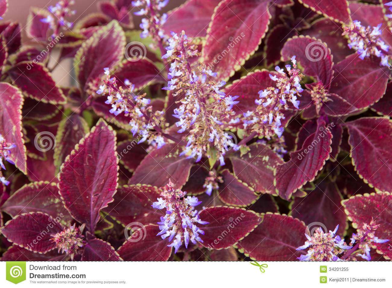 Red Leaves And Purple Flowers Stock Image Image Of Colourful