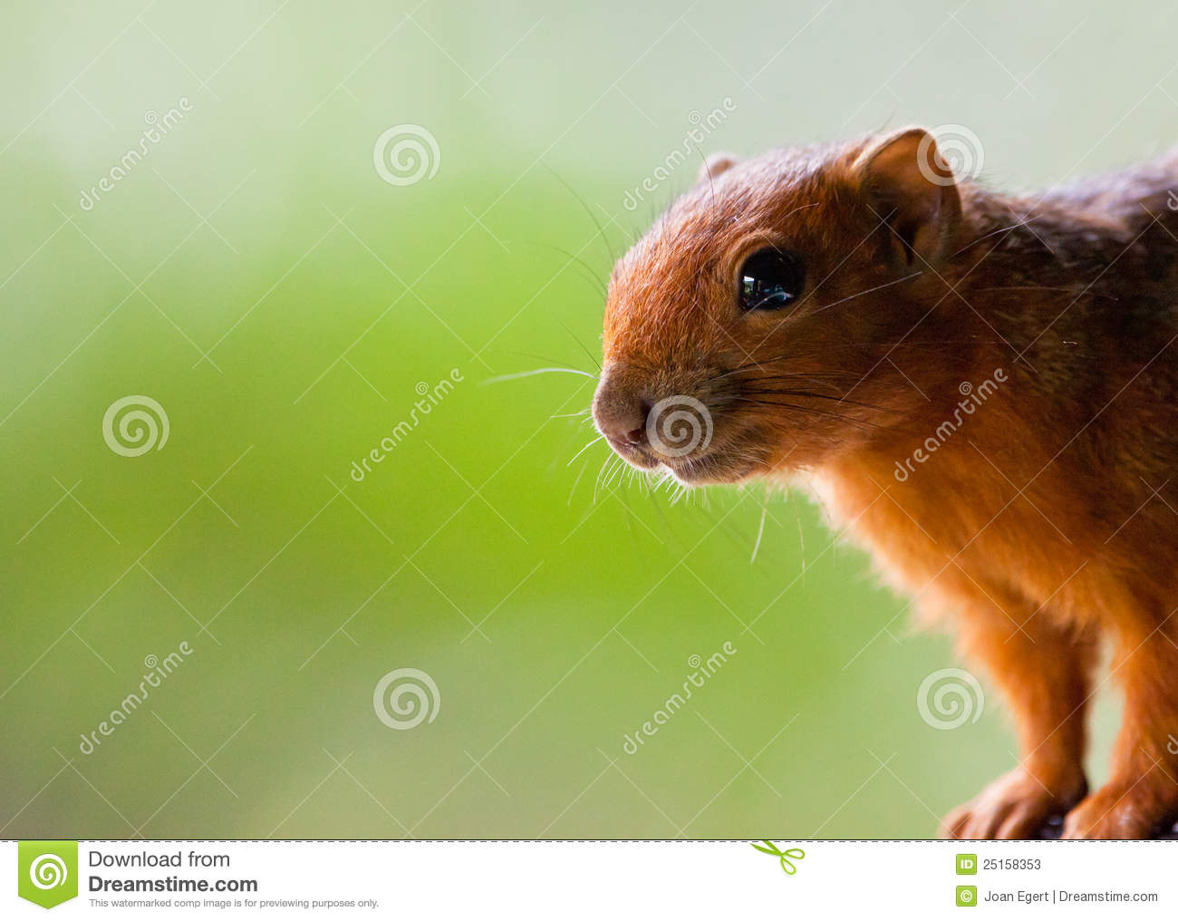 How to Choose Which Exotic Rodent to Own forecasting