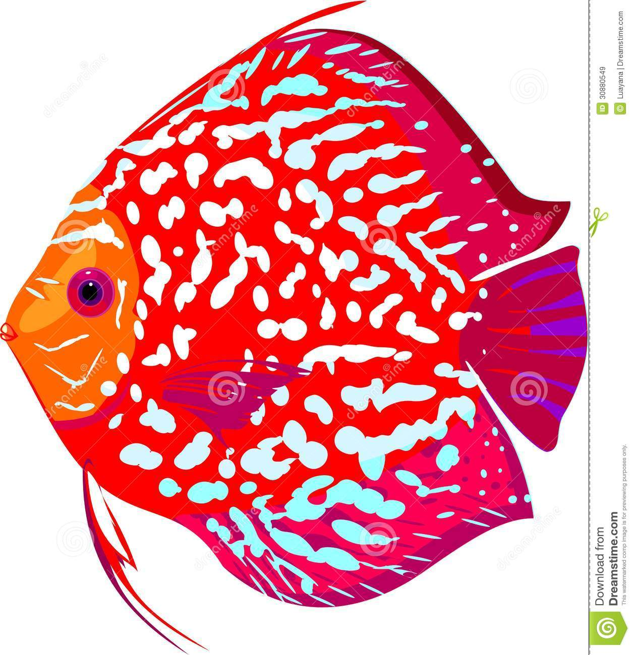 Discus Fish Stock Illustrations – 231 Discus Fish Stock ...