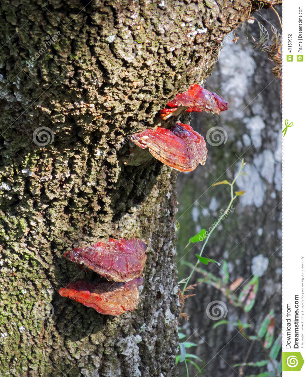 Red lichen on a tree trunk
