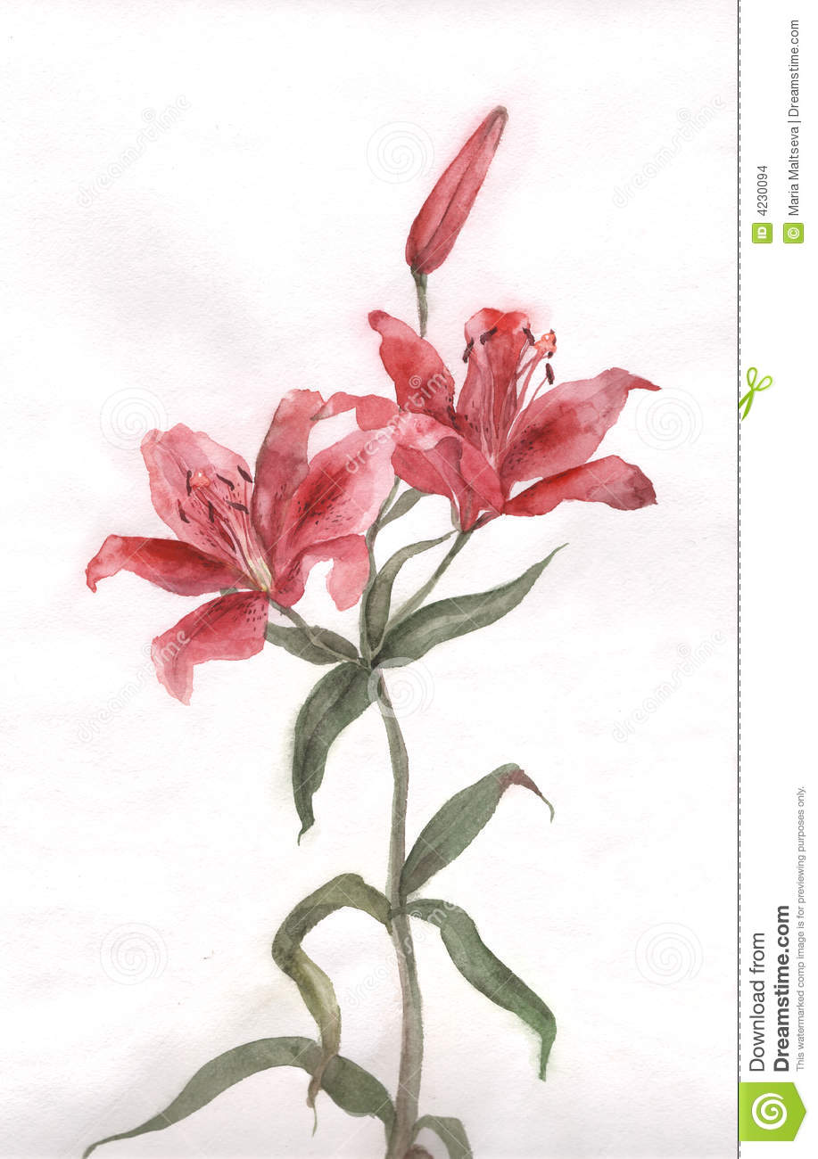 Red Lily Flower Watercolor Painting Illustration 4230094 Megapixl