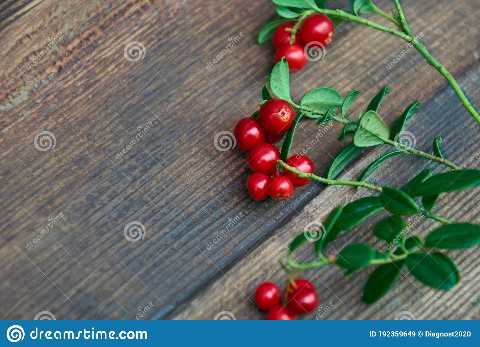 Red Lingonberry Berries Branch On Wooden Rustic Surface. Fresh ...