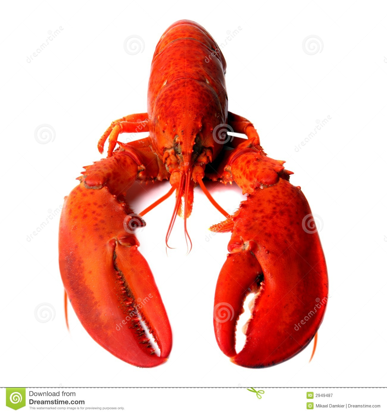 Lobster Images lobster stock photos, images, & pictures – (19,069 ...