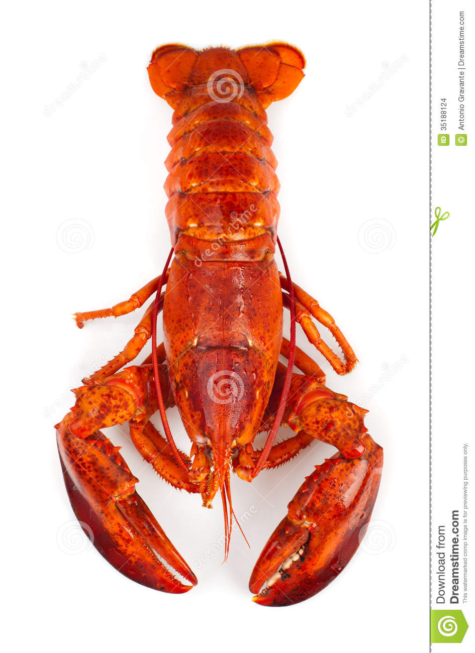 Red Lobster Stock Images - Image: 35188124