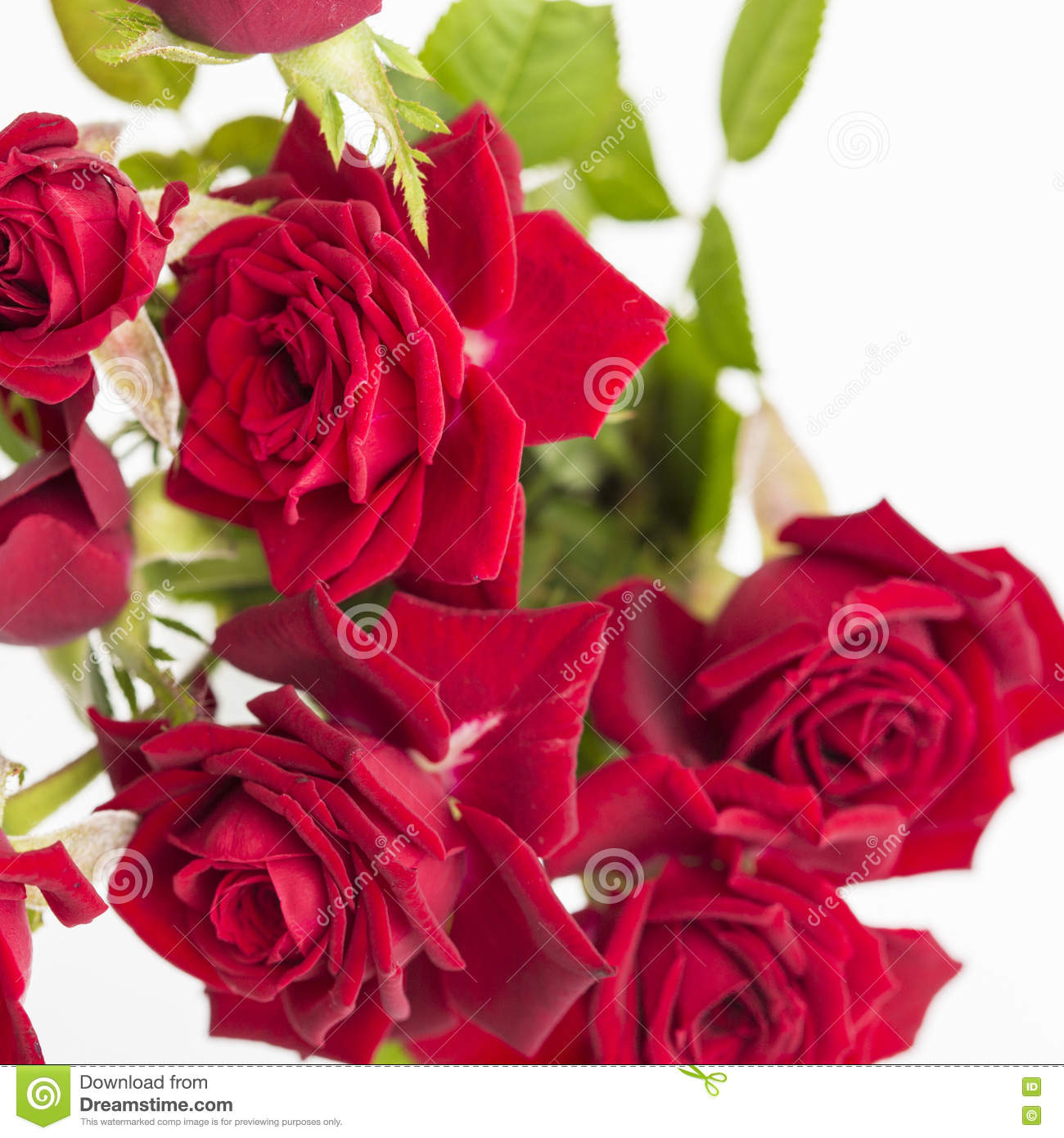 Red Love Roses Flowers Bouquet Close Up On A White Background Stock