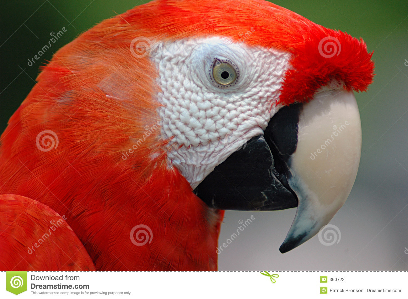 Macaw parrot red - photo#12