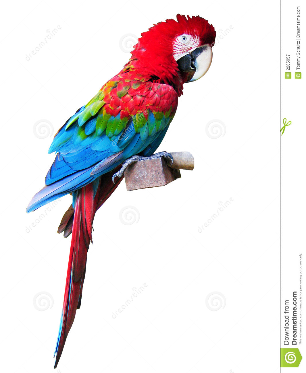 Macaw parrot red - photo#23