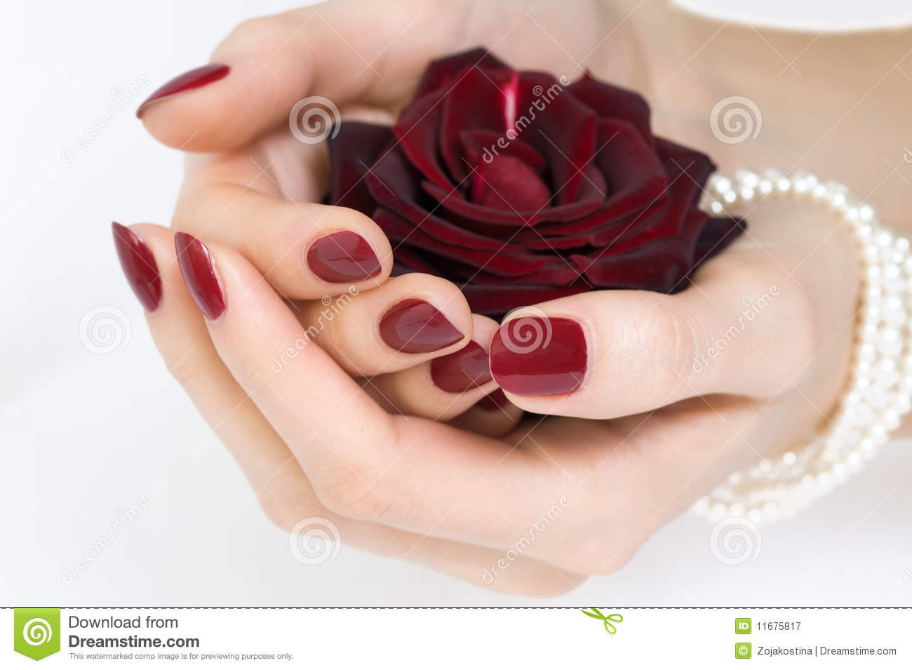 Red manicure and rose stock image. Image of female, nails - 11675817