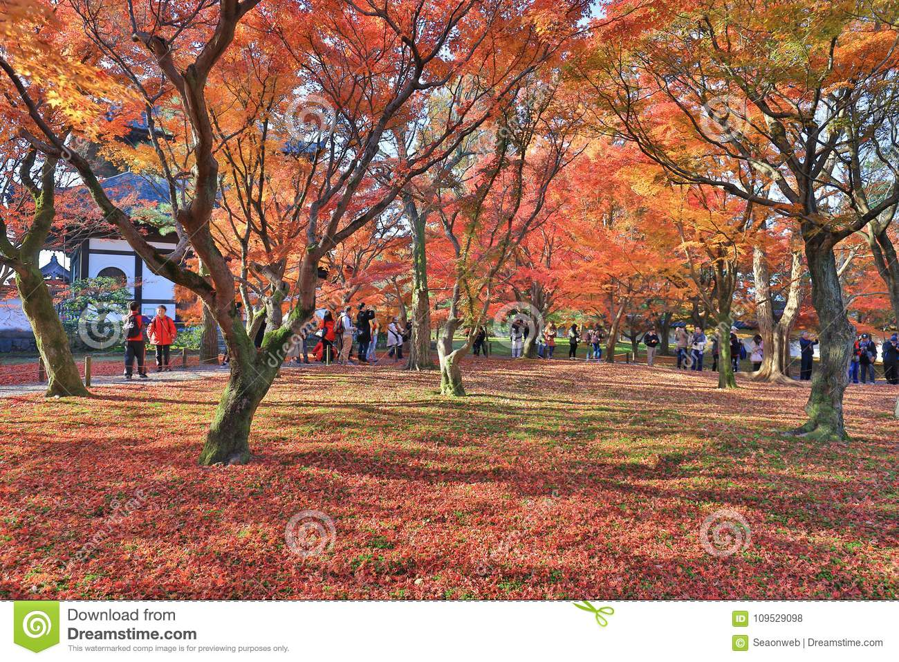 The Red Maple Garden At Tofuku Ji Temple In Kyoto Editorial Stock ...