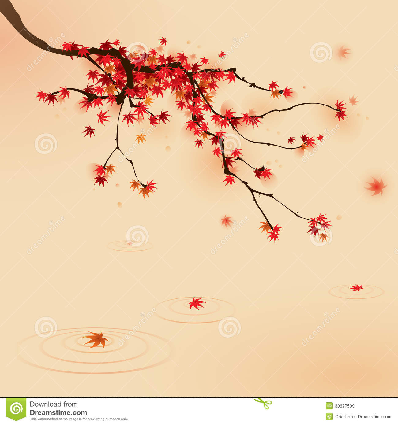 Red Maple Tree In Autumn Stock Vector Image Of Japanese 30677509