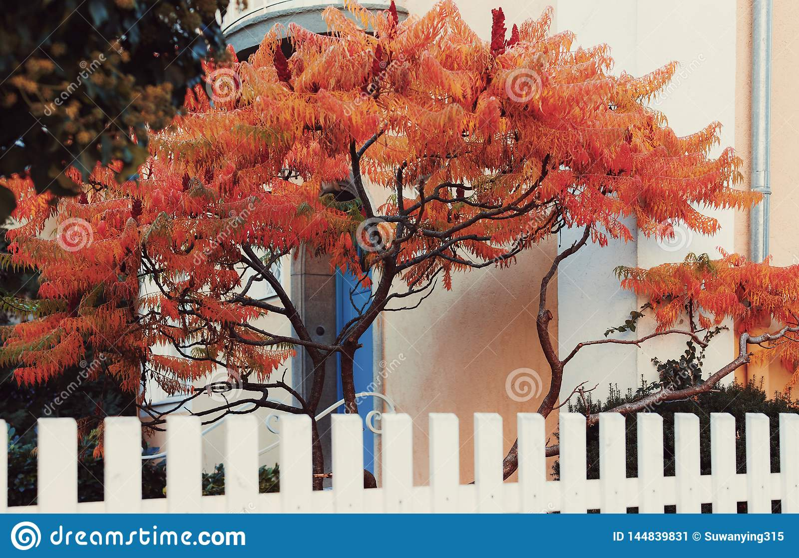Red maple tree in front of blue door